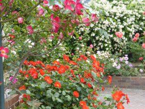 rosegarden-37
